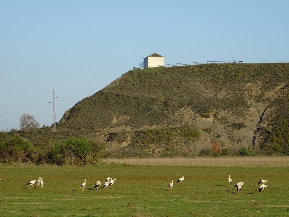 Cigüeñas en Sabiñánigo