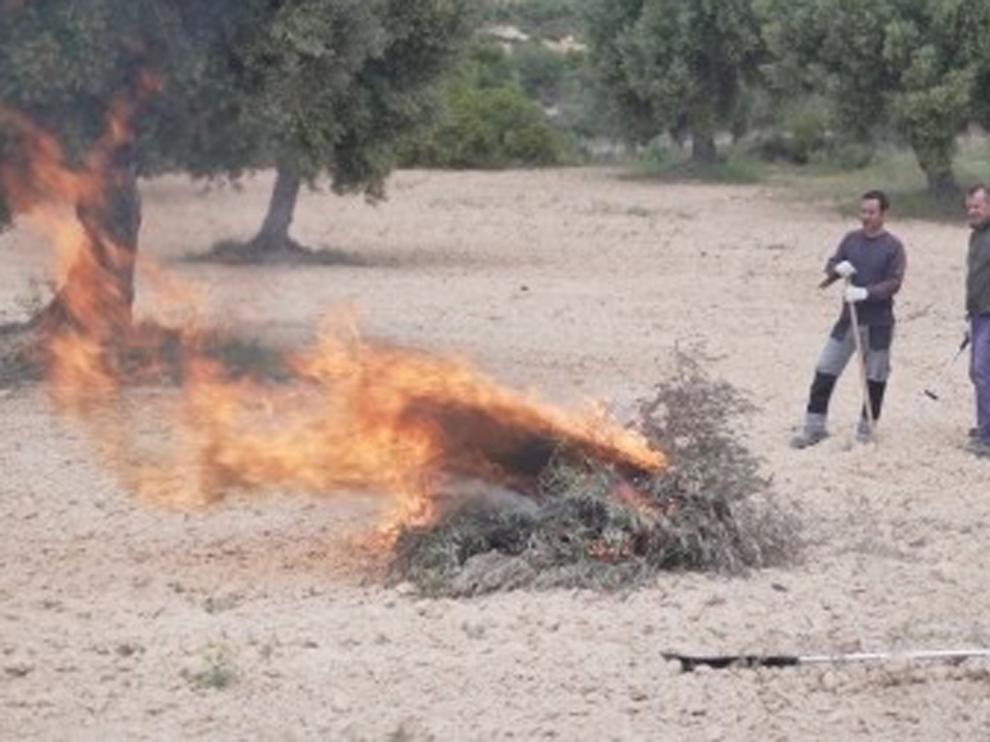 Agilizan los trámites para las quemas en olivares