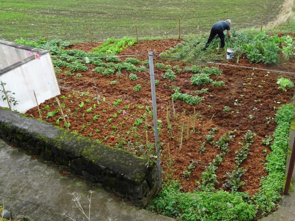 Los pueblos reclaman poder cuidar los huertos familiares durante el estado de alarma por el coronavirus