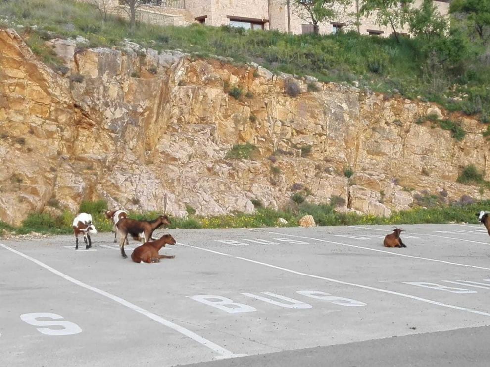 Unas cabras bien aparcadas