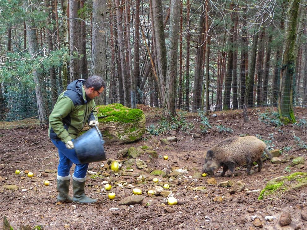El parque de Lacuniacha trabaja a puerta cerrada para cuidar a los animales