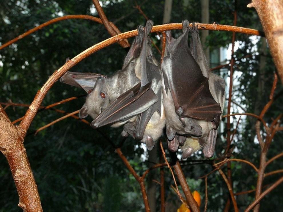 El Ministerio de Sanidad confirma que los murciélagos son el origen reservorio del virus