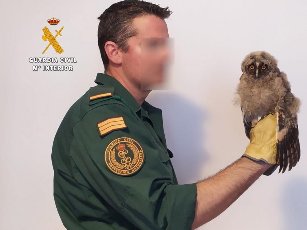 El Seprona, con ayuda ciudadana, rescata una cría de búho chico