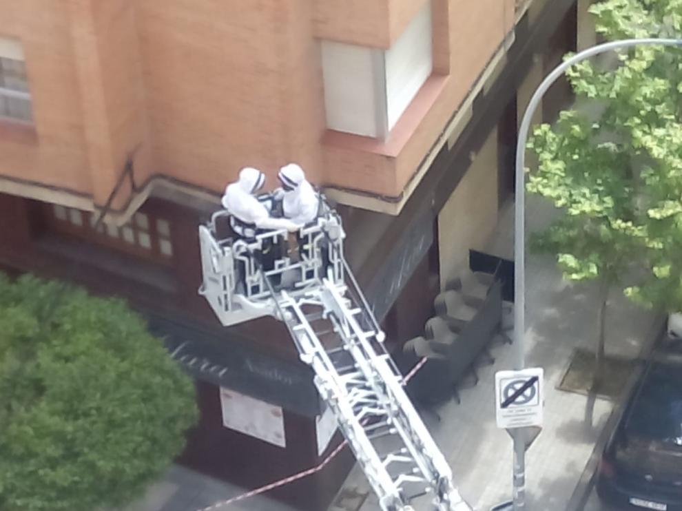 Los bomberos de Huesca retiran un enjambre de abejas en un árbol entre la calle Tarbes y Doctor Cardus Llanas