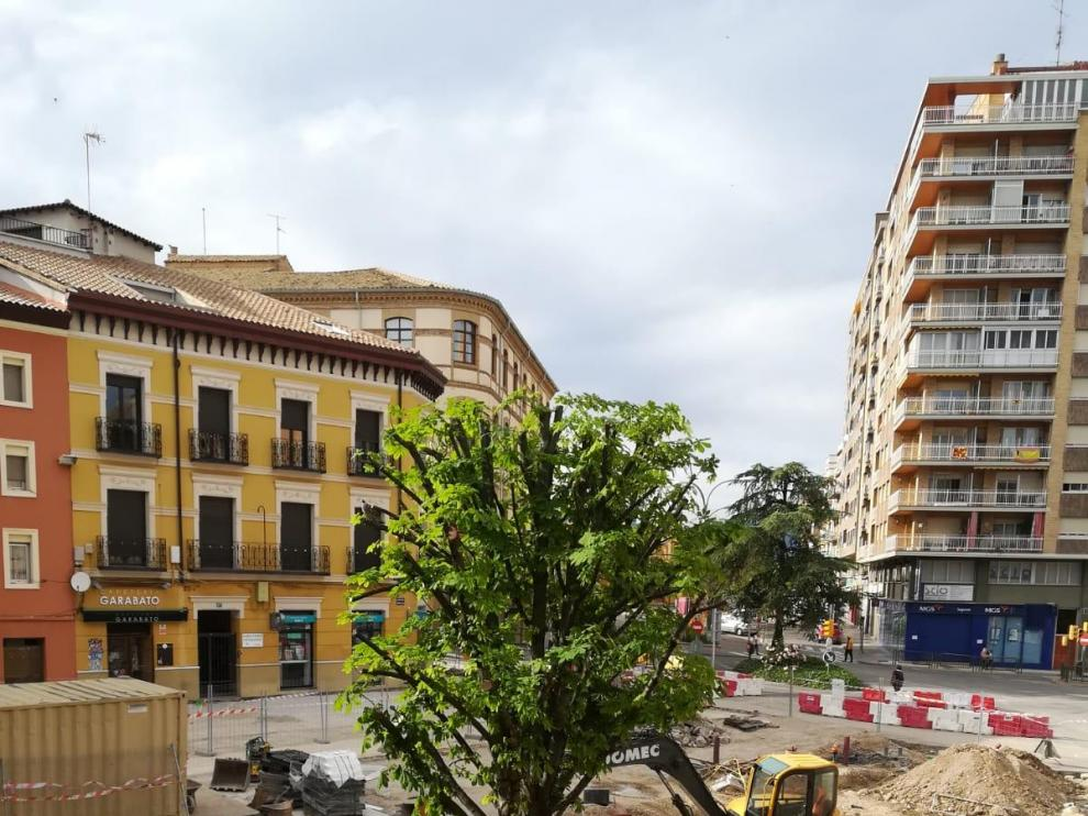 Vecinos de la plaza Santo Domingo de Huesca piden que no se tale el último árbol