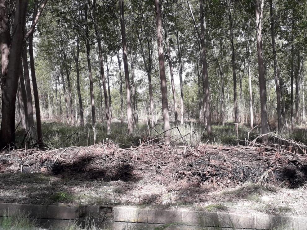 Extinguido el incendio de Monzón tras afectar a 30 hectáreas de la chopera