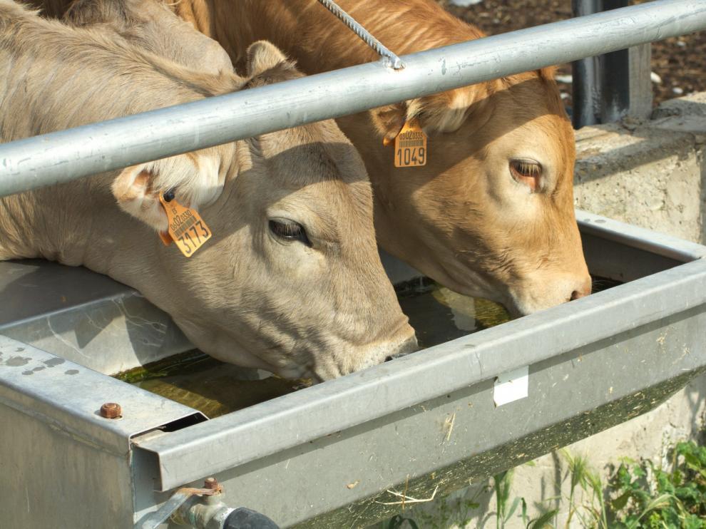 Las ayudas al almacenamiento de carnes de ovino, caprino y vacuno se podrán solicitar desde el jueves