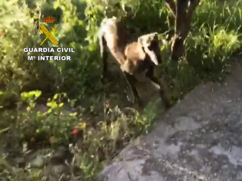 La Guardia Civil recupera dos perros que habían sido robados de una caseta de campo en Monzón