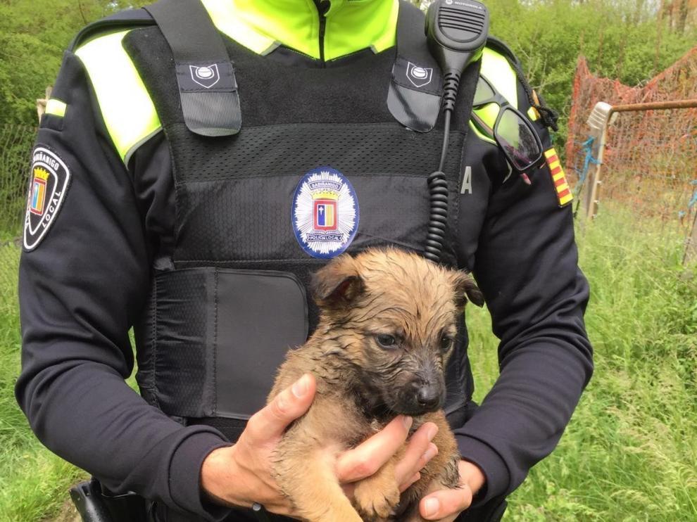Rescatan ocho perros abandonados en Sabiñánigo