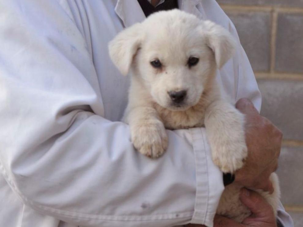 El Centro de Recogida de Animales de la DPH reanuda el servicio de adopciones