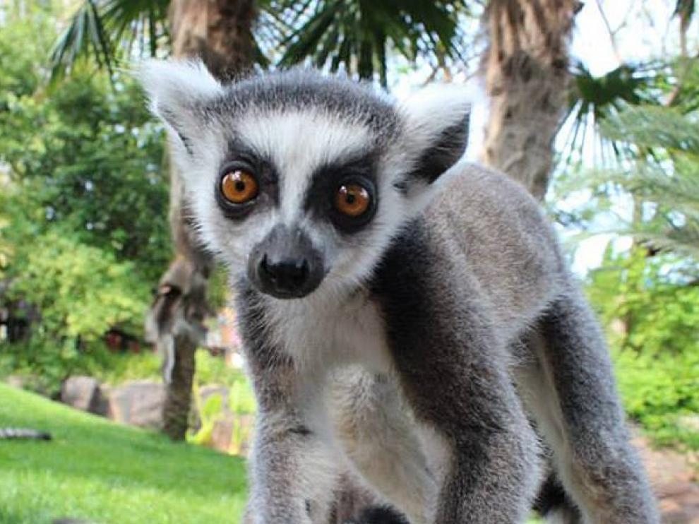Una nueva vida sin turistas para los animales del zoo de Fuengirola