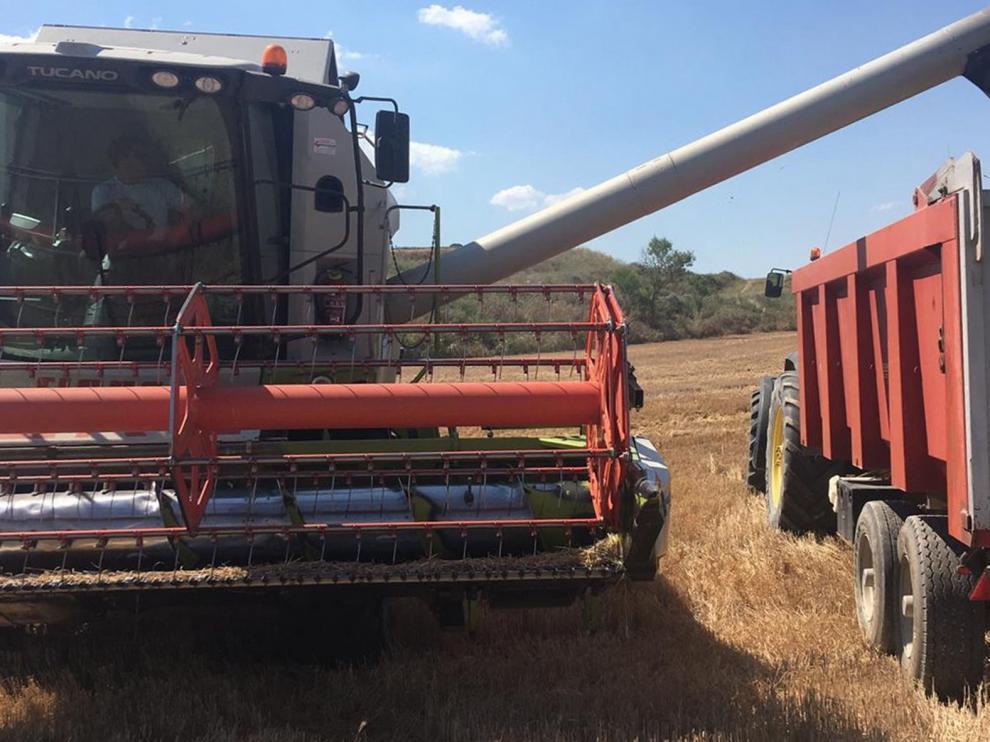 Las primeras cosechadoras entran en los campos de cebada