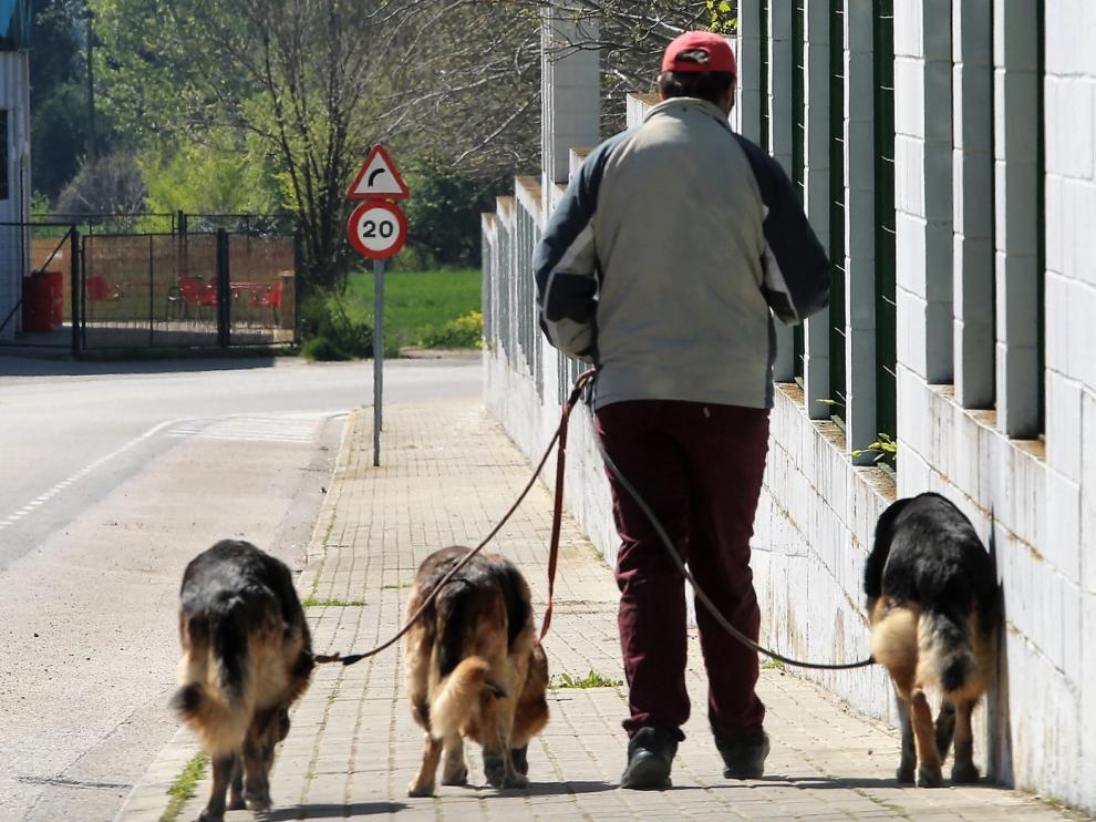 Los perros pueden volver a los parques respetando la Ordenanza de Convivencia