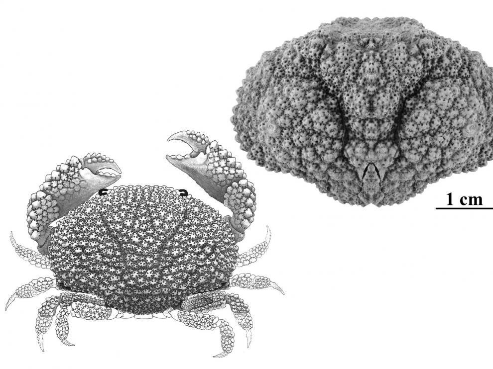 Descubiertos nuevos arrecifes de coral fosilizados en el Pirineo aragonés