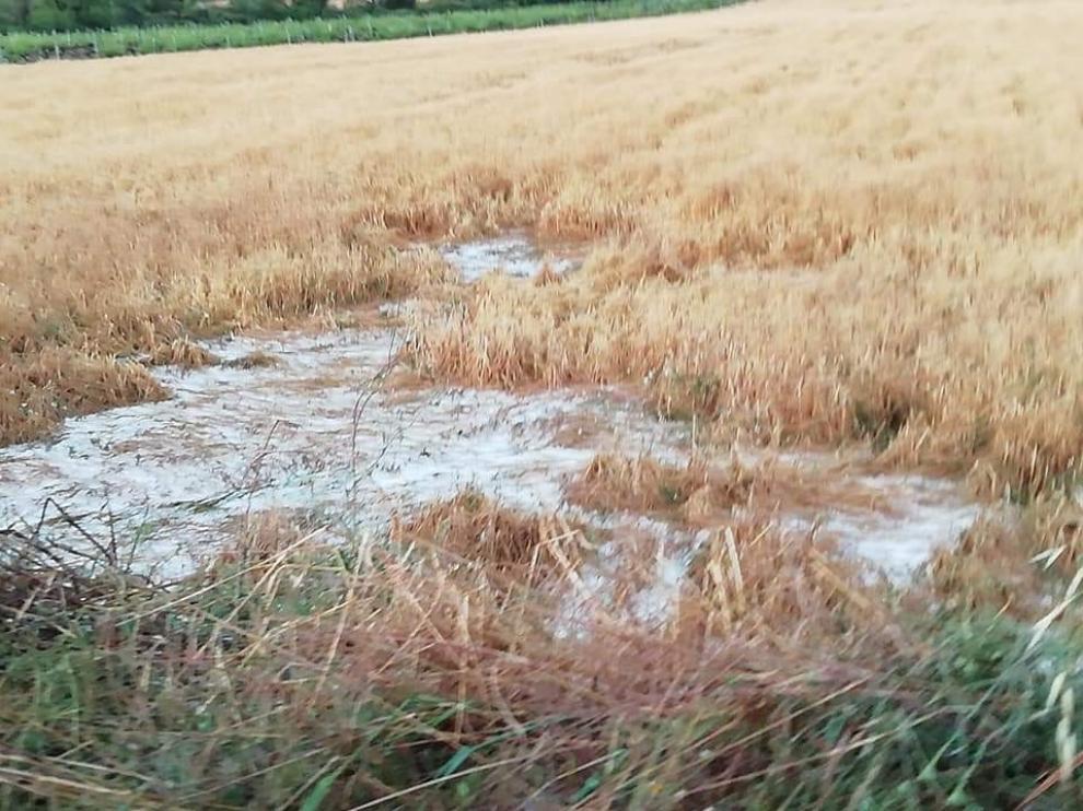 Pozán de Vero registra daños importes en cultivos de cereales