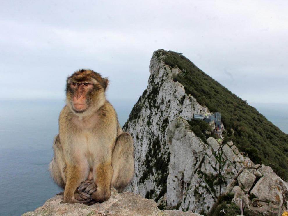 Tocar a los macacos será delito en Gibraltar