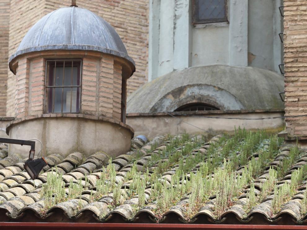 Vegetación en el tejado