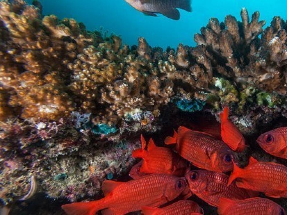 Cambio climático, sobrepesca y vertidos, desafíos de los mares