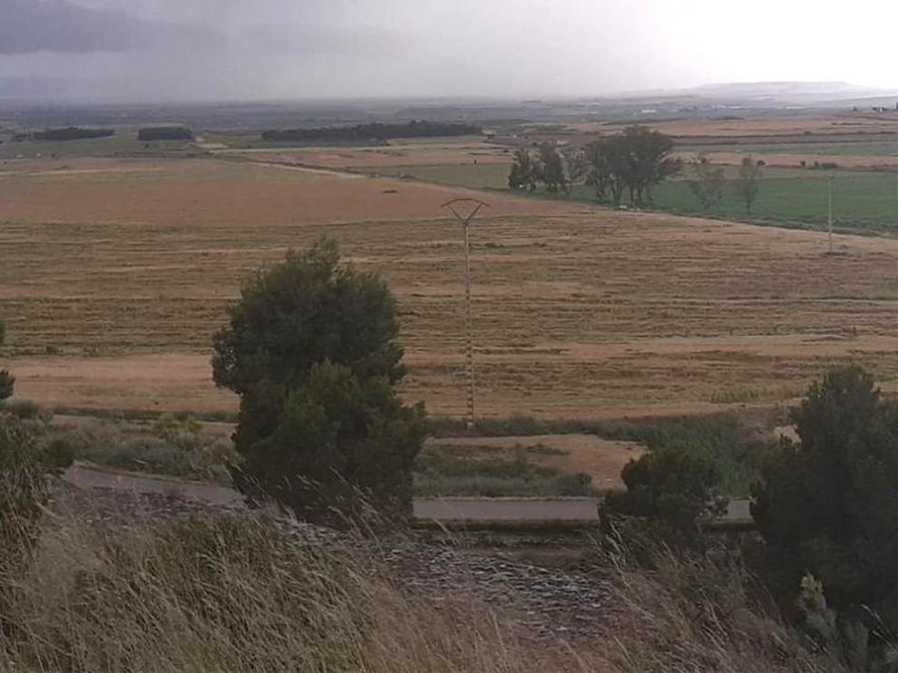 Daños en la cosecha de cereal por tormentas de pedrisco en Gurrea de Gállego y Alcubierre