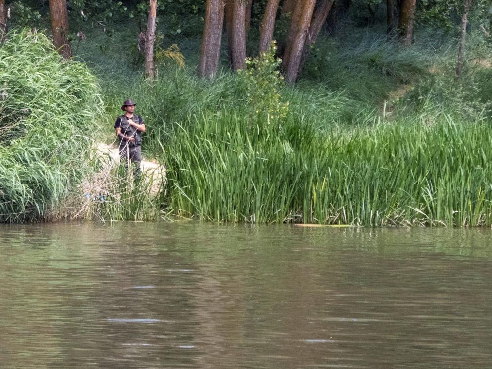 Sigue la búsqueda de un cocodrilo de un metro y medio en Simancas