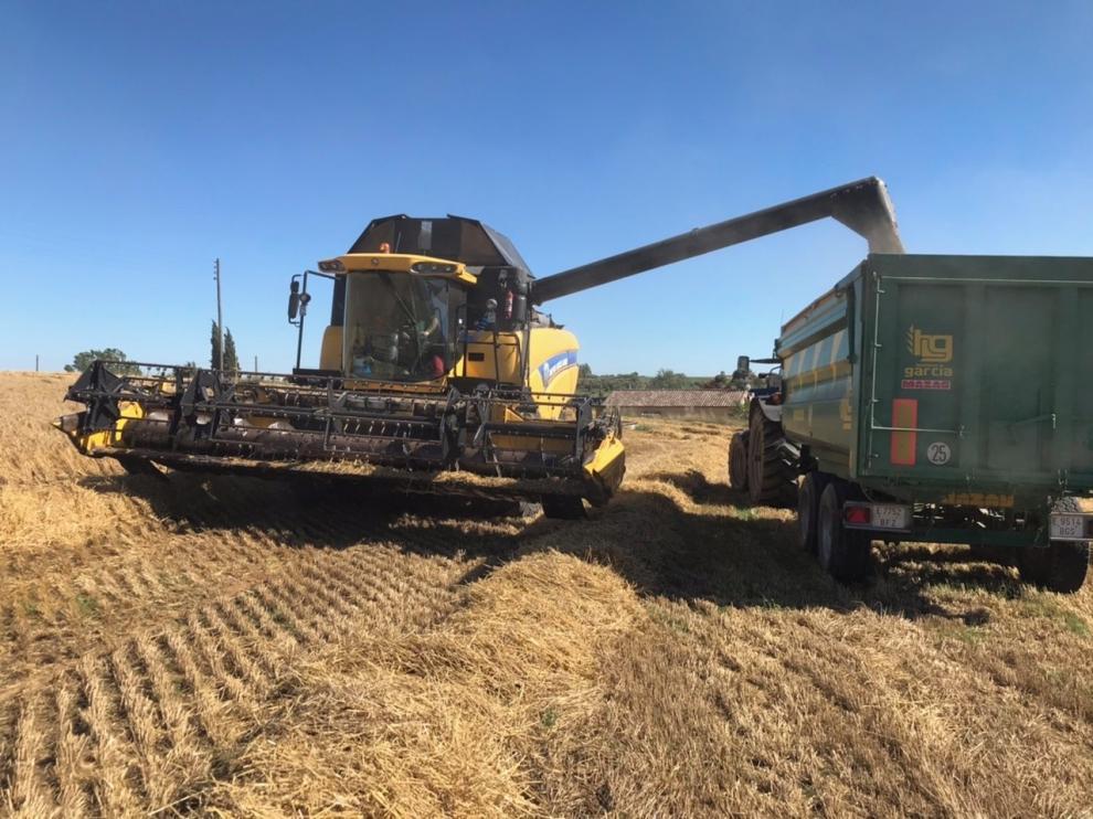 Auguran una buena cosecha de cereal  de invierno en la provincia de Huesca