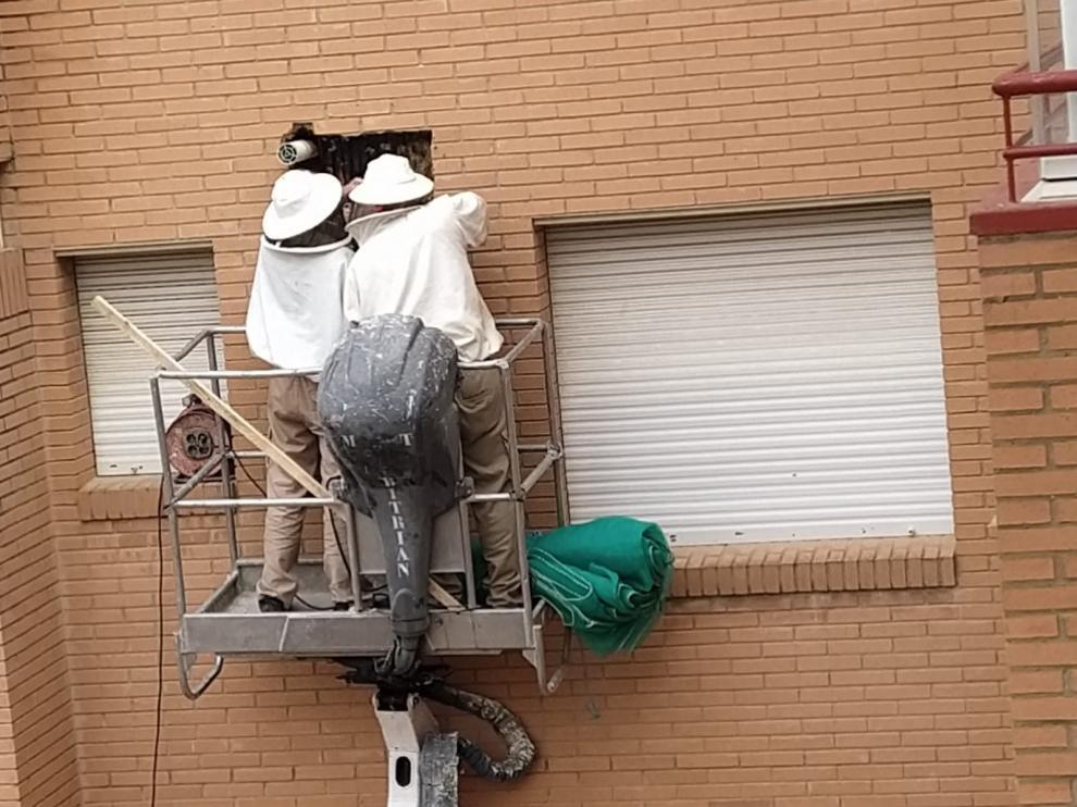 Retiran un enjambre de abejas en la fachada de un edificio en Huesca