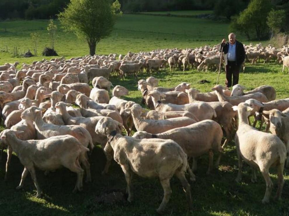 El caprino y el ovino reciben ayudas del Gobierno central