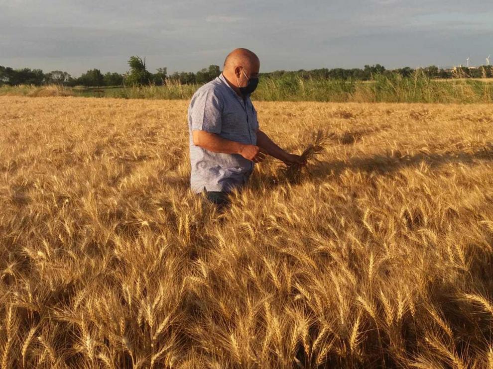 Cereales y frutales, los cultivos más afectados por las tormentas