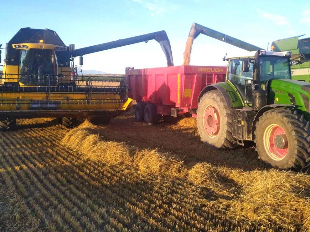 La cosecha de cereal se reactiva en la provincia