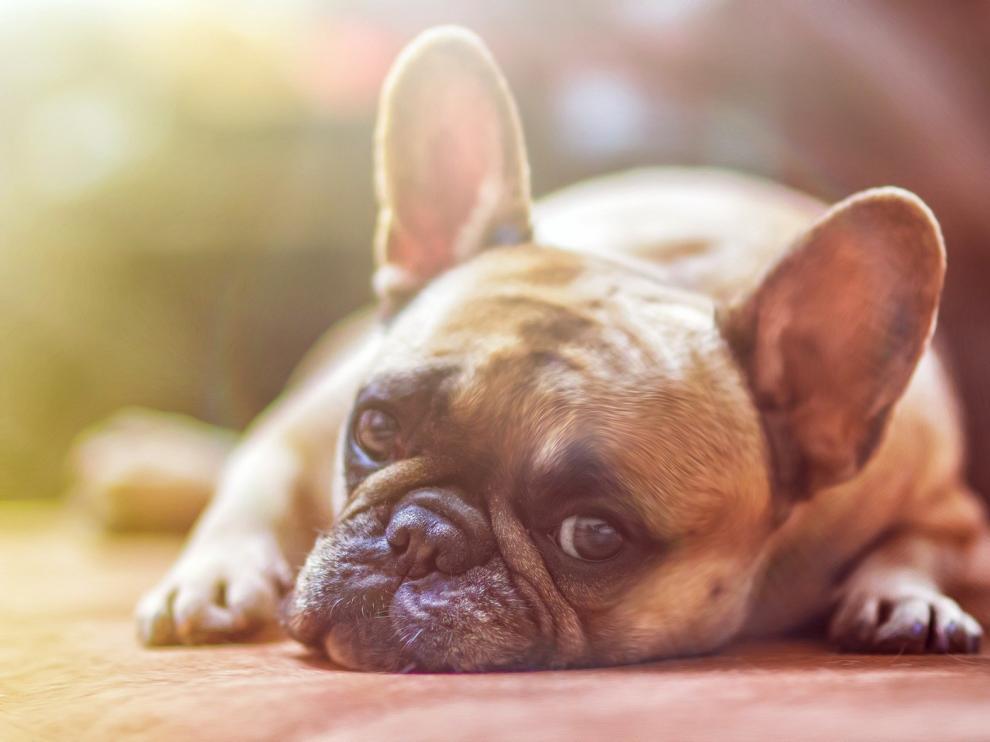 Aumentan un 25 por ciento los abandonos de mascotas