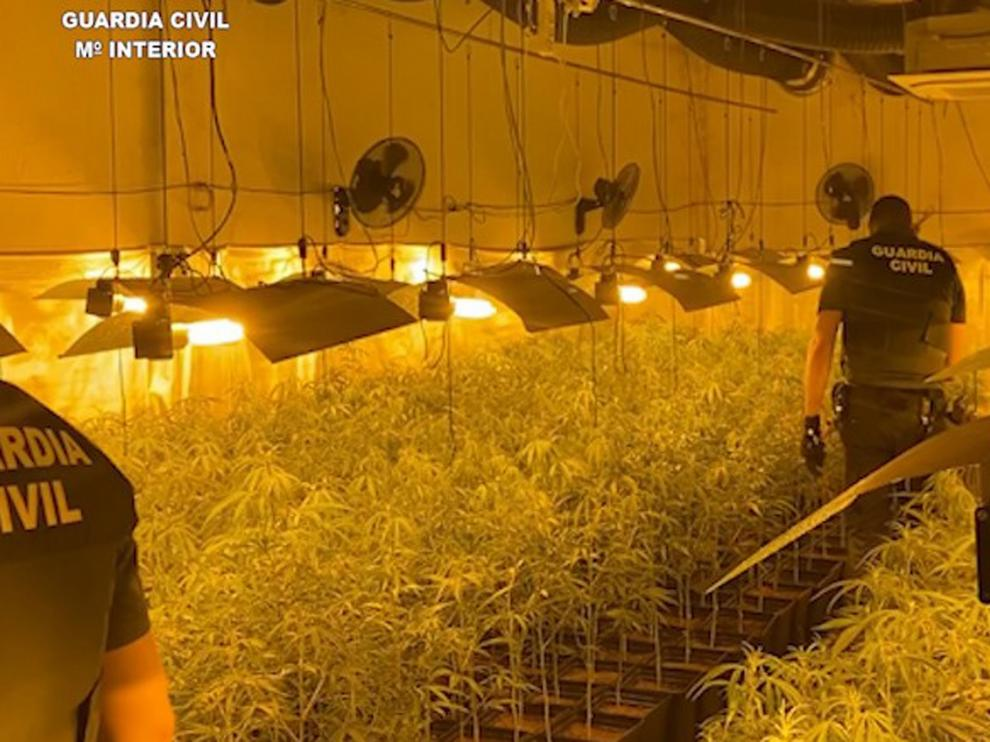 """La Guardia Civil detiene en La Litera a dos personas e incuta 1.400 plantas de marihuana en una plantación """"indoor"""""""