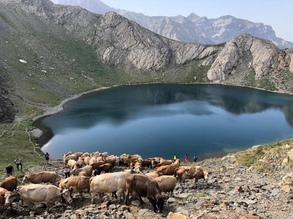 La trashumancia pervive en el Pirineo como legado histórico