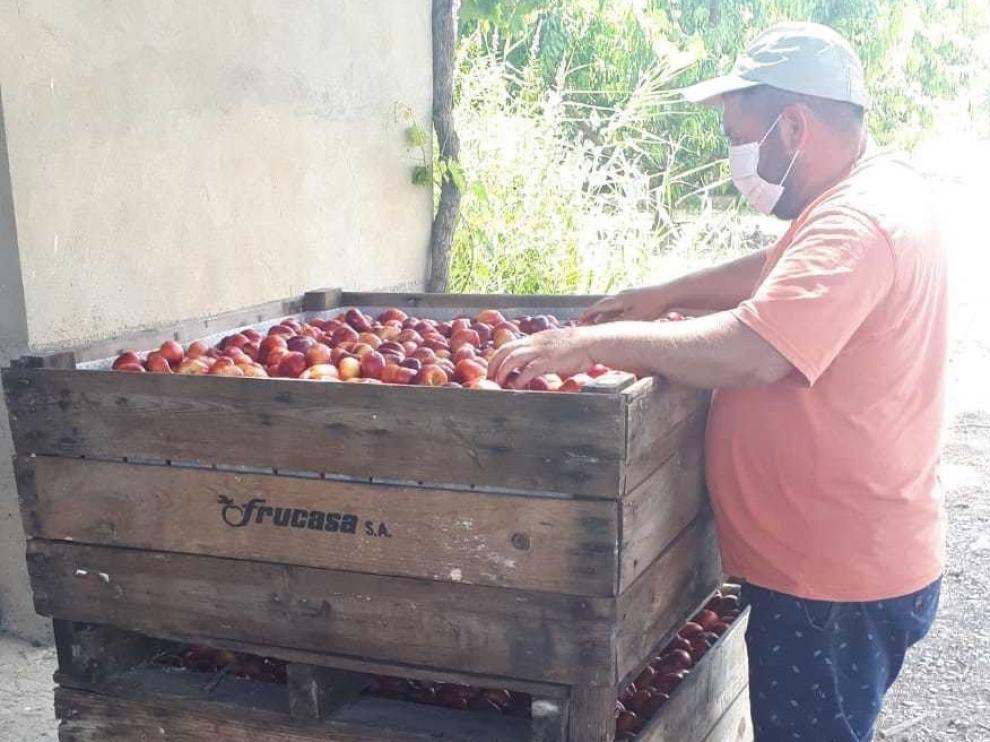 El sector frutícola de la zona oriental redobla esfuerzos frente a los rebrotes