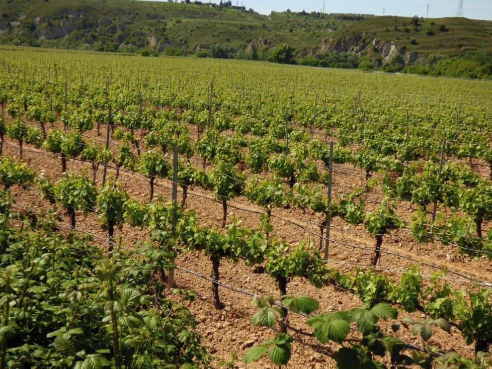 Joaquín Olona considera que la comercialización del vino es un reto para Aragón