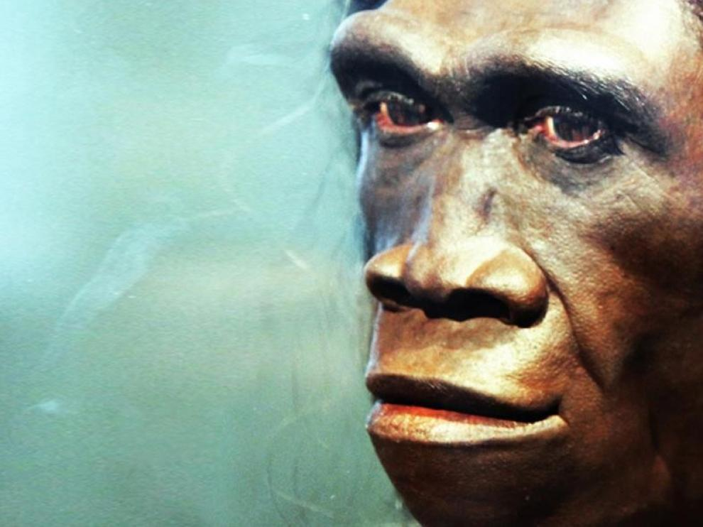 El Homo erectus era achaparrado, no esbelto