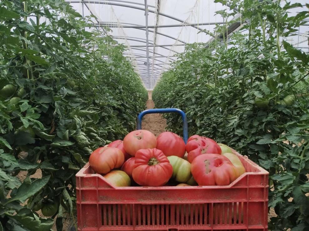 Aragón destina dos millones de euros al sector agroalimentario