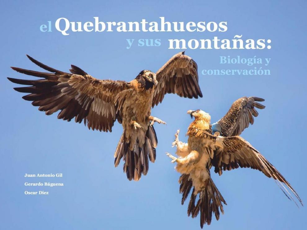 El éxito de la recuperación del quebrantahuesos, de 39 a 88 parejas en 25 años en el Pirineo aragonés