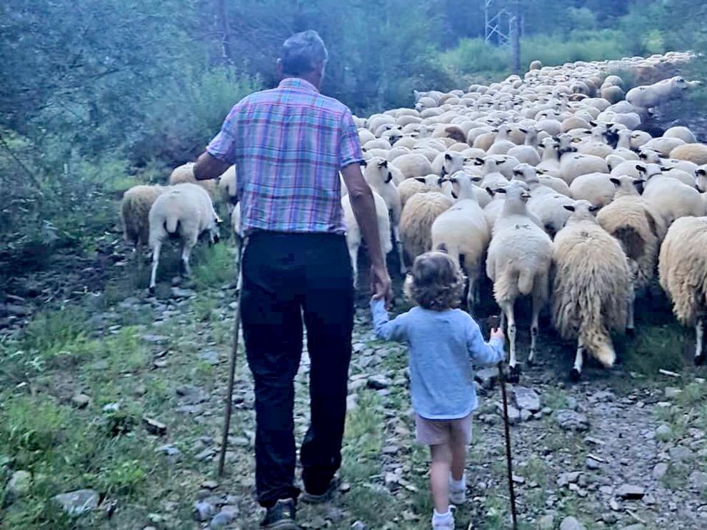 El veraneo de las ovejas