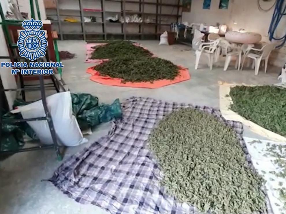 La Policía Nacional interviene cinco toneladas y media de marihuana y desarticula una organización dedicada a su cultivo a gran escala
