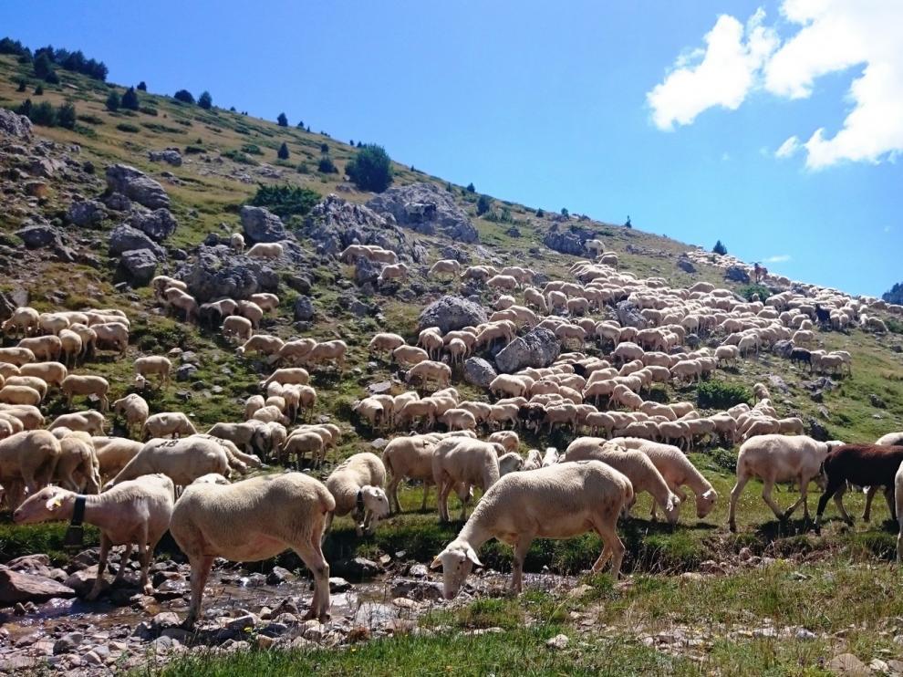 Los ganaderos de Huesca ya pueden pedir ayudas por el oso y el lobo