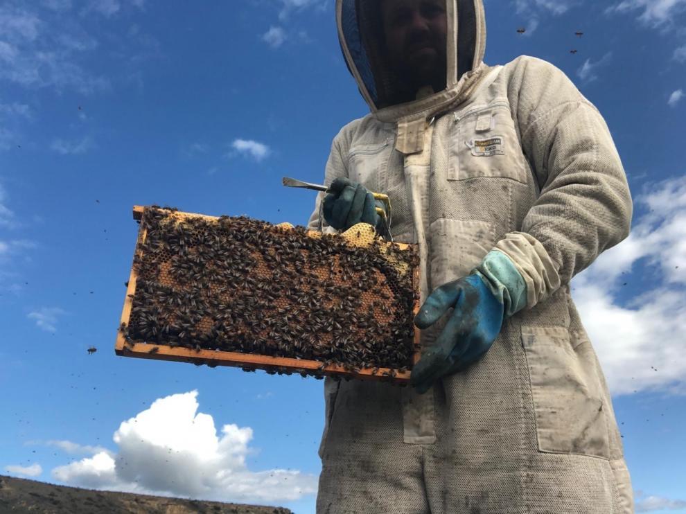 """""""La producción de miel ha caído un 60 % por el cambio climático"""""""