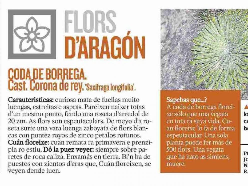 Aragón Natural, nuevo proyecto didáctico sobre fauna y flora