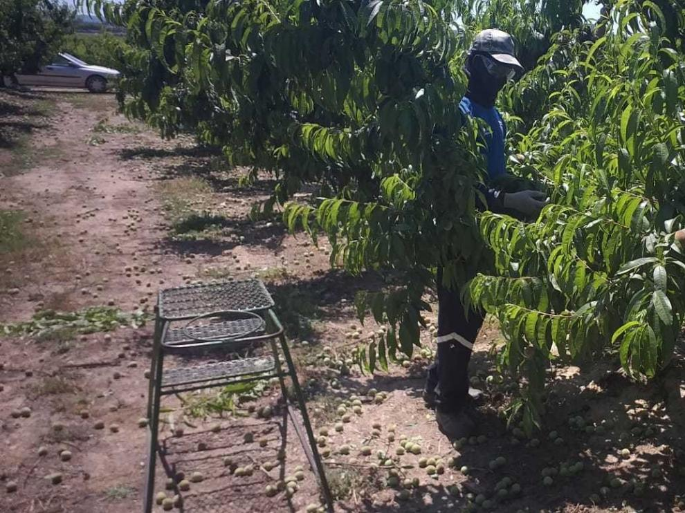 Las organizaciones agrarias critican que se criminalice al sector primario
