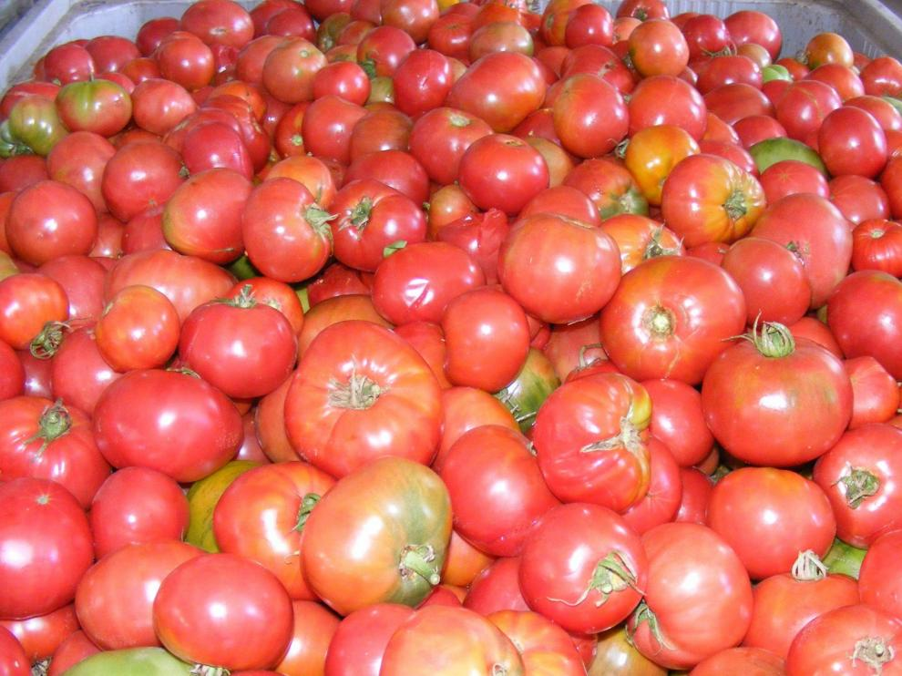 Convenio para comprar Tomate Rosa de destrío en esta campaña