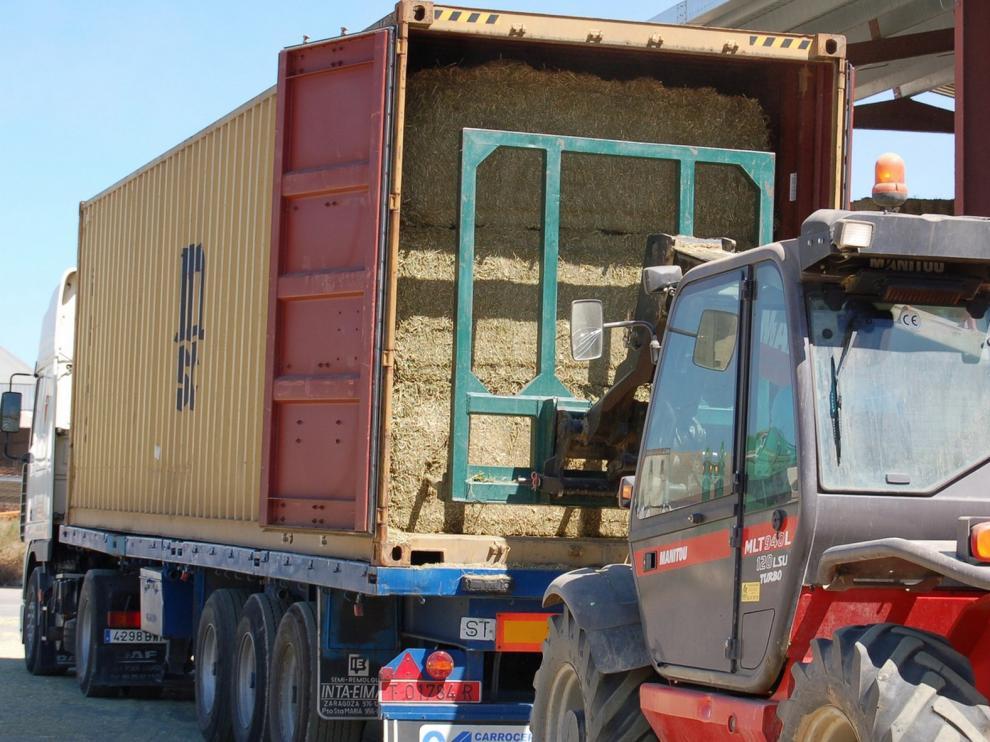 Alfeed logra exportar 75.000 toneladas de alfalfa al año