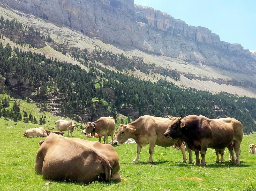 Asaja reivindica la importancia del sector agroganadero en la provincia de Huesca