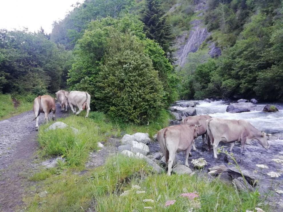 Aragón recibirá 192.472 euros contra plagas y enfermedades animales