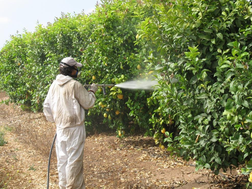 Más de 230.000 euros en sanciones en las inspecciones de trabajo en las campañas agrícolas en Aragón