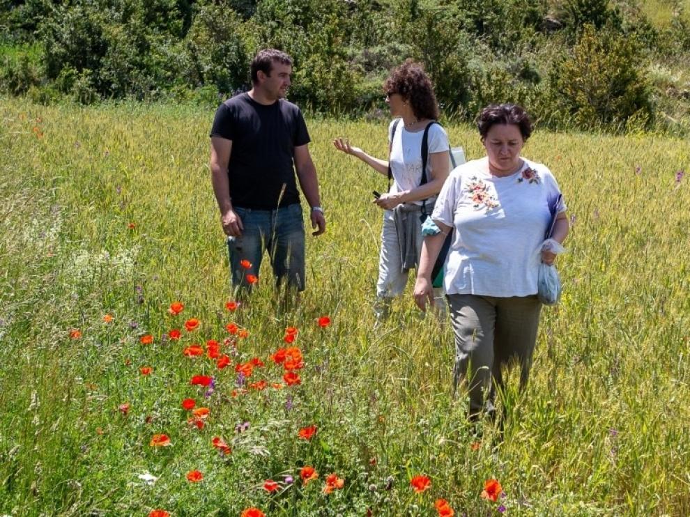 El Cita participa en un proyecto para conseguir hábitats de polinización