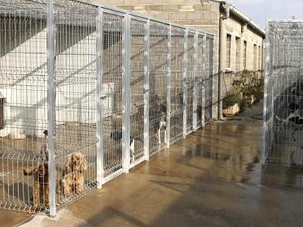 Unos 140.000 perros y gatos son recogidos en España cada año